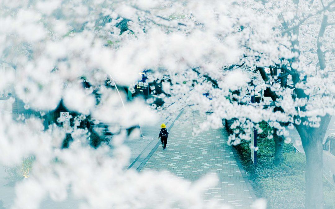 Sakura Season – Best Tokyo Street Photos of '18 part 2